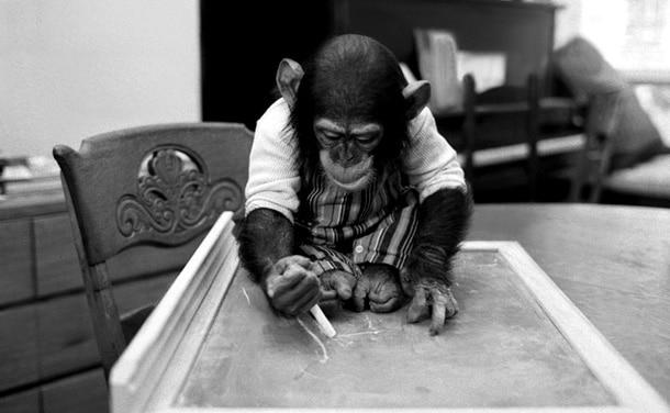 Bigpicture ru 14 12 16 primates 14