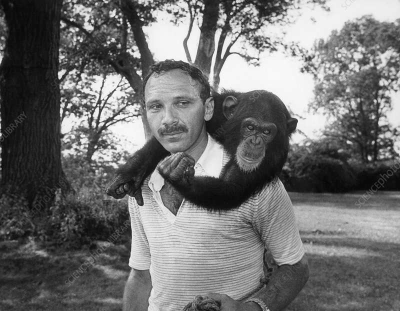 Professor herbert terrace with nim chimpsky