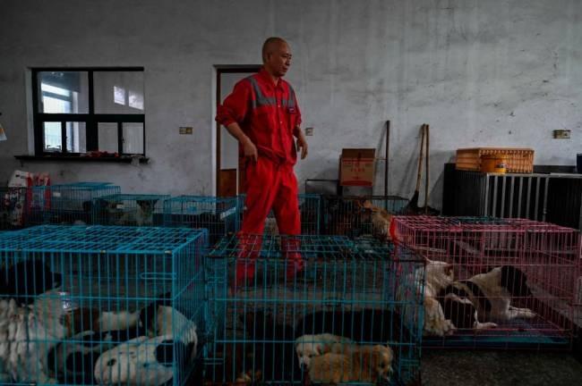 Bigpicture ru china animal monk religion 00062