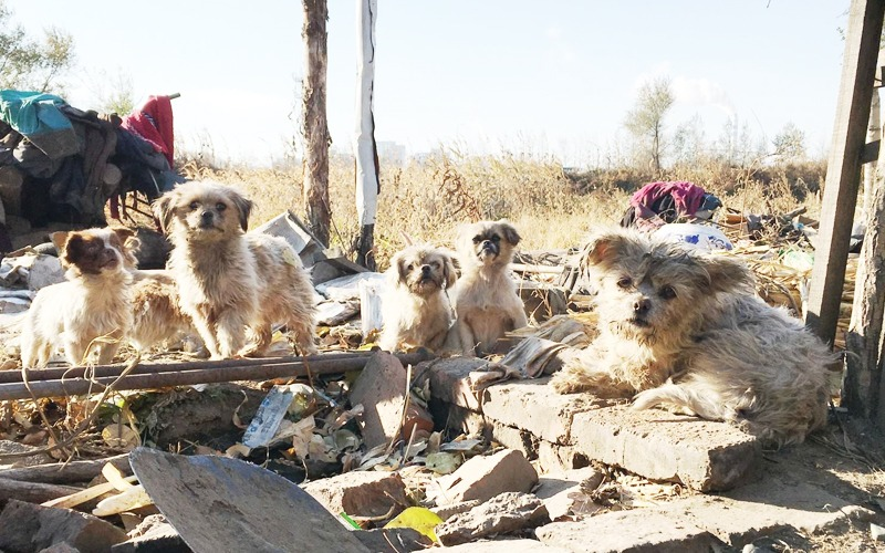 Bigpicture ru stray dogs in china cgtn pic