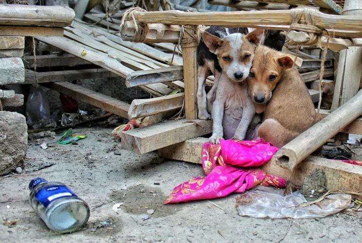 Bigpicture ru stray dogs