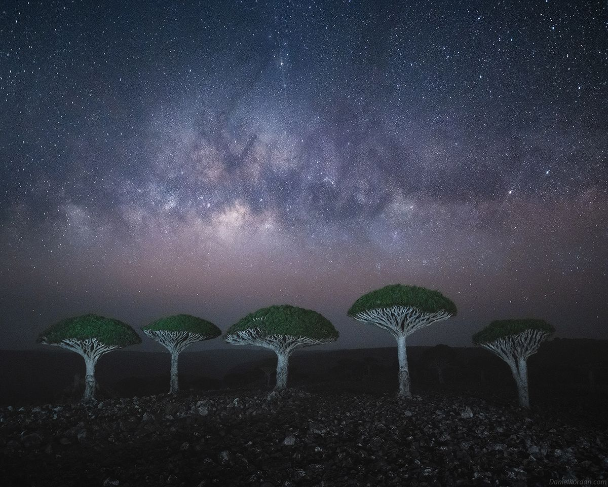 Bigpicture ru 1626197272 135 photographer captures the beautiful dragons blood trees of socotra