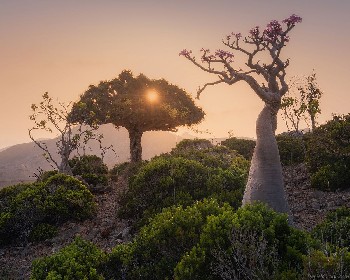 Bigpicture ru 1626197273 195 photographer captures the beautiful dragons blood trees of socotra (1)