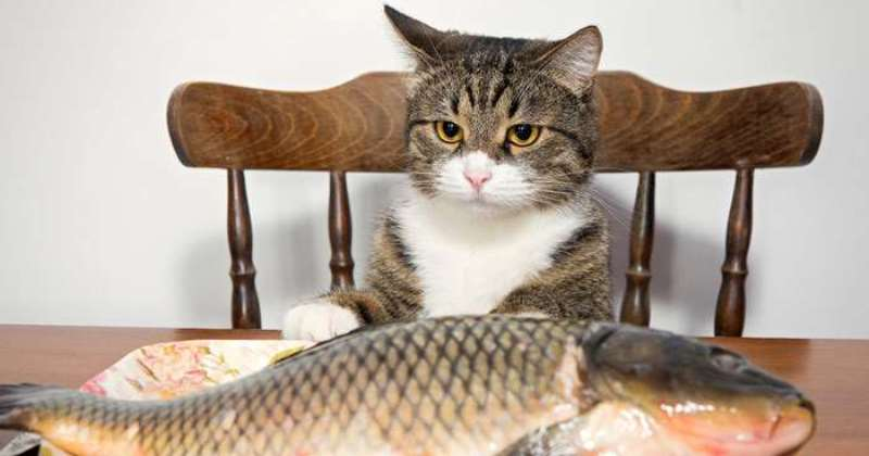 «Вы продоете рыбов»: история самого милого мема этого лета фото