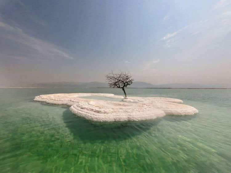 Bigpicture ru dead sea tree