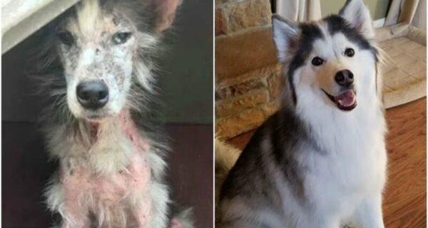 33 фото собак до и после спасения, которые трогают душу