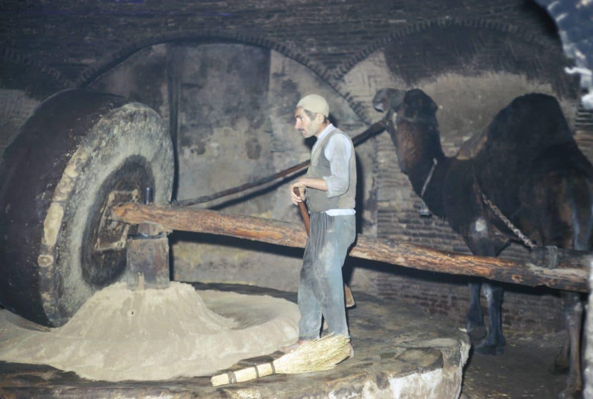 Bigpicture ru iran camel powered grain grinder