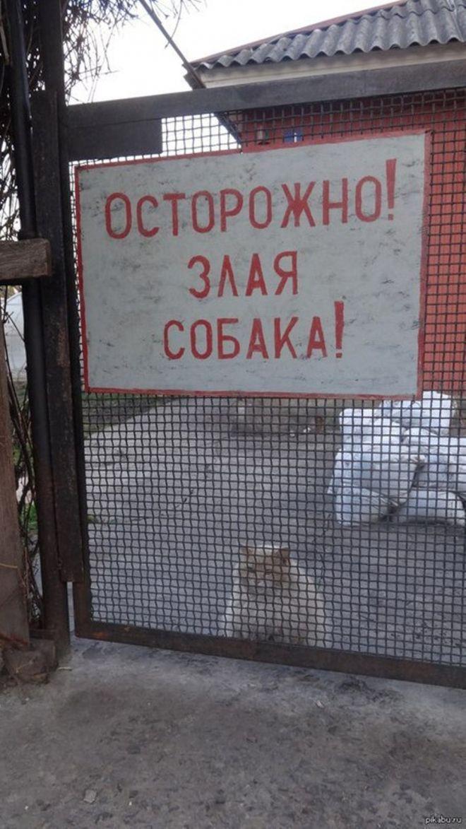 Bigpicture ru 9sobaka tak sobaka