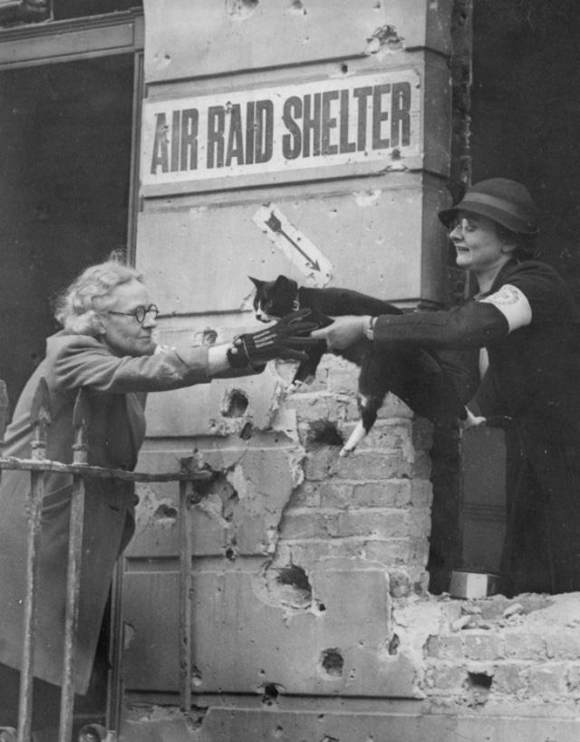 Bigpicture ru british pet massacre 8