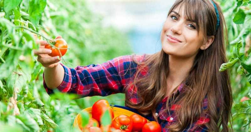 Bigpicture ru devushka s pomidorami