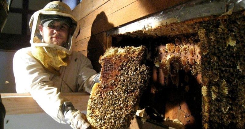 Bigpicture ru remove bees from wall hive removal 2 interesting bee