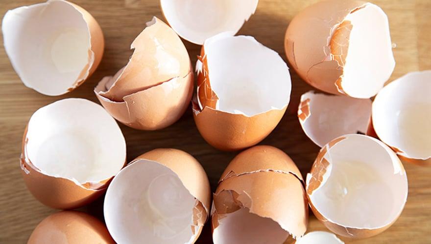 Bigpicture ru 01 egg shells gettyimages 1136556806 880