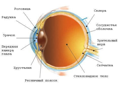 Откуда берутся мушки в глазах и можно ли от них избавиться