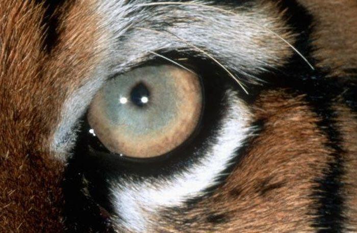 Bigpicture ru animals eyes 001