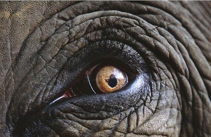 Bigpicture ru animals eyes 002