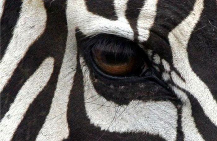 Bigpicture ru animals eyes 003