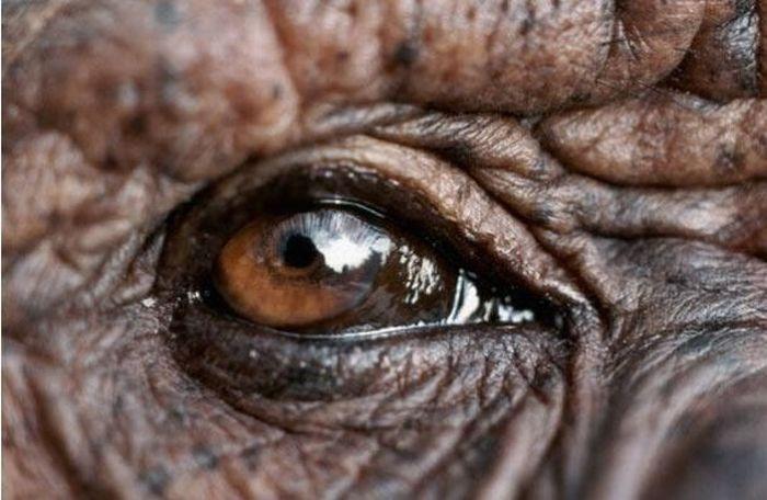 Bigpicture ru animals eyes 004