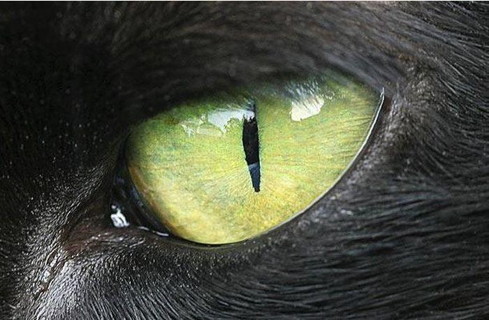 Bigpicture ru animals eyes 006