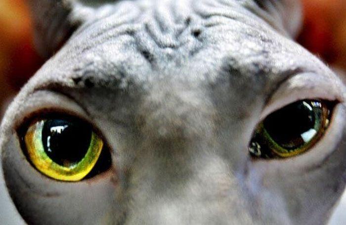 Bigpicture ru animals eyes 007