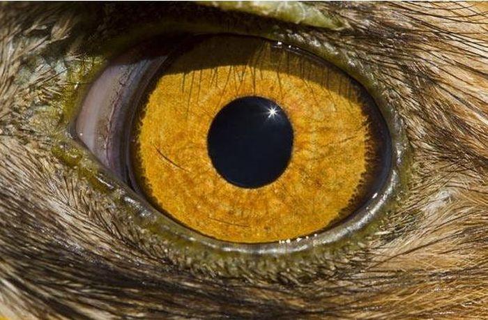 Bigpicture ru animals eyes 009