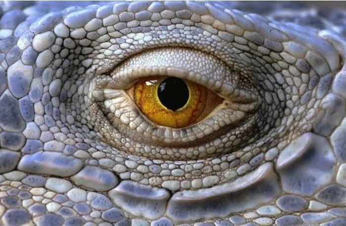 Bigpicture ru animals eyes 010