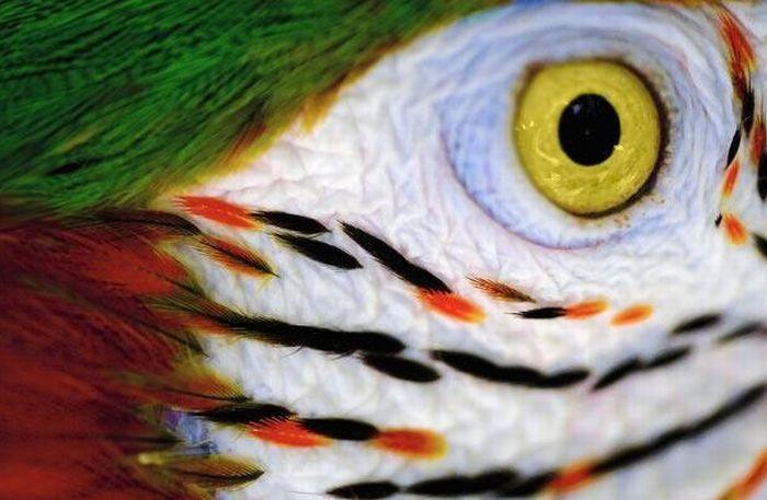 Bigpicture ru animals eyes 011