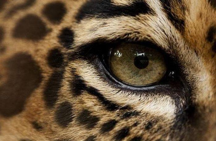 Bigpicture ru animals eyes 012
