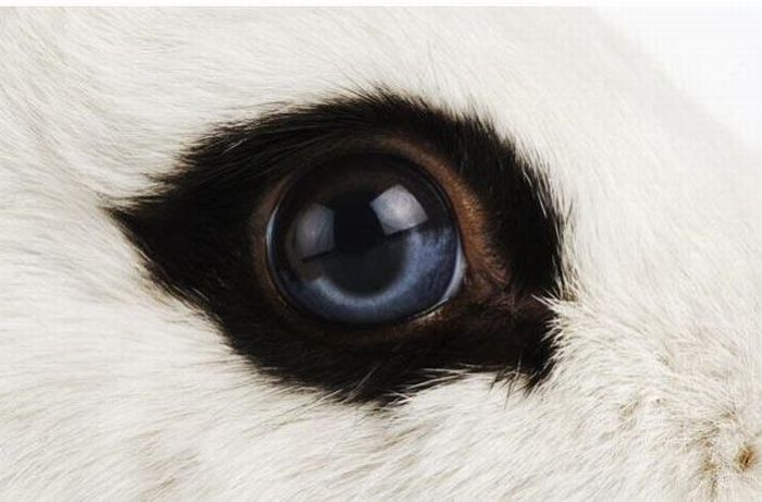 Bigpicture ru animals eyes 013