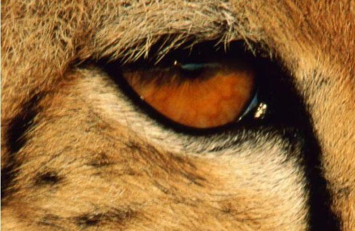 Bigpicture ru animals eyes 014