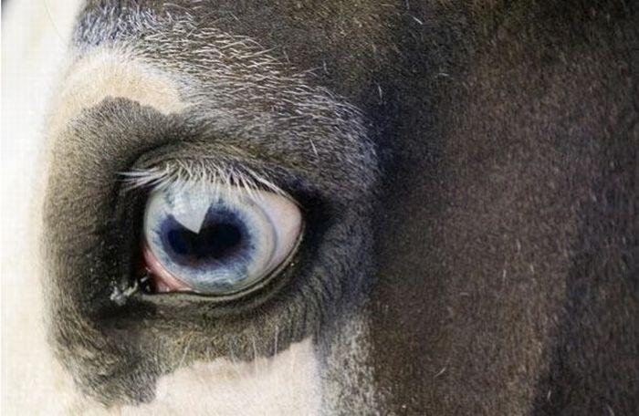 Bigpicture ru animals eyes 015