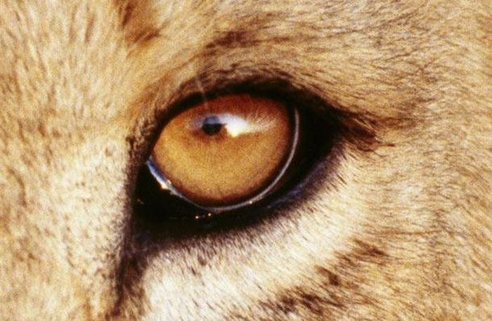 Bigpicture ru animals eyes 016