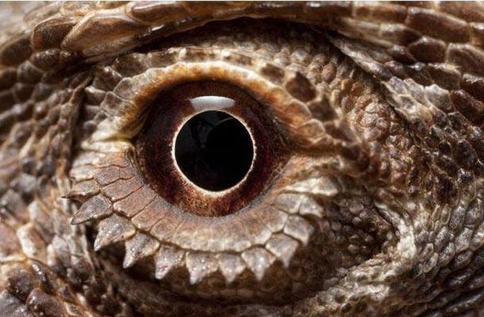 Bigpicture ru animals eyes 017