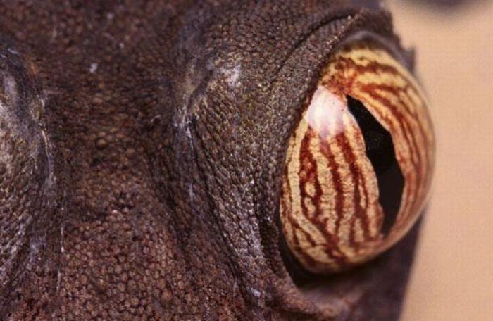 Bigpicture ru animals eyes 018