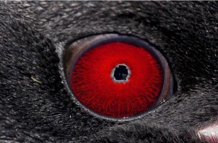 Bigpicture ru animals eyes 019