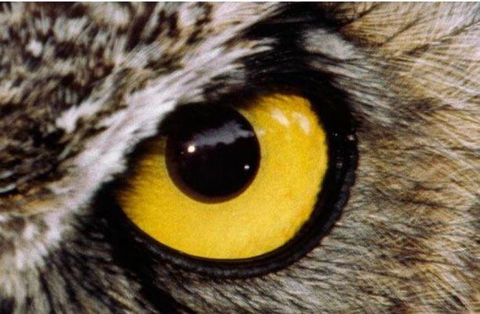 Bigpicture ru animals eyes 021