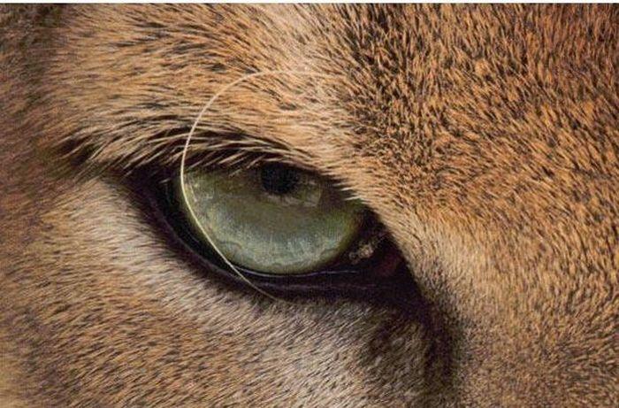 Bigpicture ru animals eyes 022