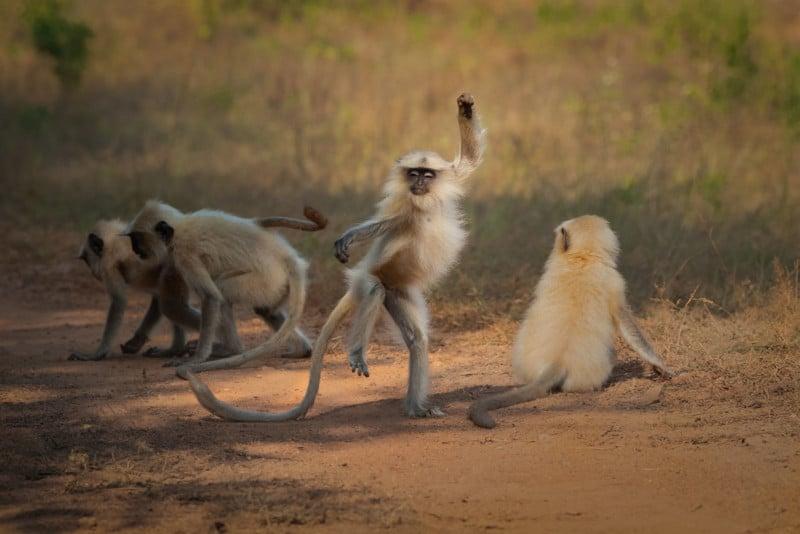 Bigpicture ru sarosh lodhi dancing away to glory 00005652 800x534 1