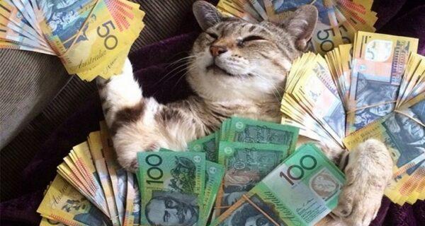 Bigpicture ru cat zah1