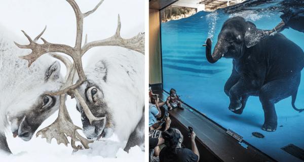 22 финалиста конкурса фотографий дикой природы Wildlife Photographer of the Year2021