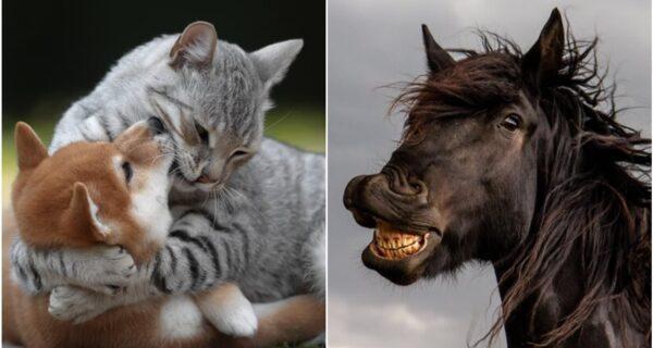 30 смешных снимков животных с конкурса Comedy Pet Photo Awards 2021