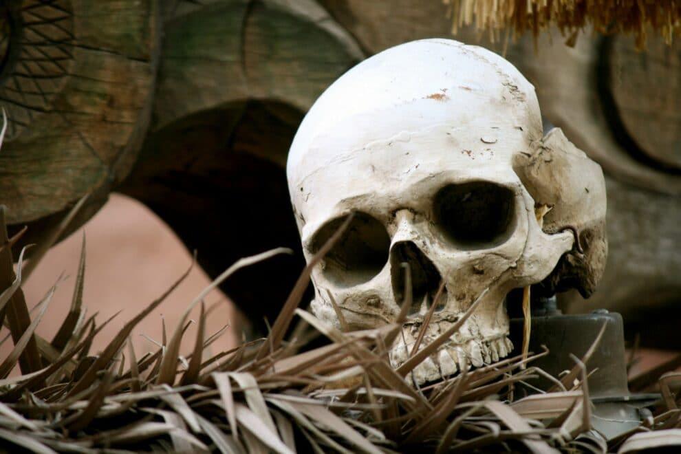 Bigpicture ru trava cherep kosti ostanki